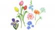 jarních květů