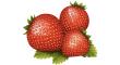 jahodového listí