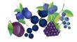 černého ovoce