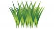 trávy
