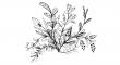 sušených bylinek
