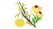 žlutých květů